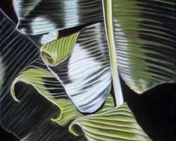 "212 Banana Leaves, 2004  (22"" x 30"")"