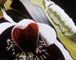 """212 Banana Blossom, 2005 (19"""" x 25"""")"""